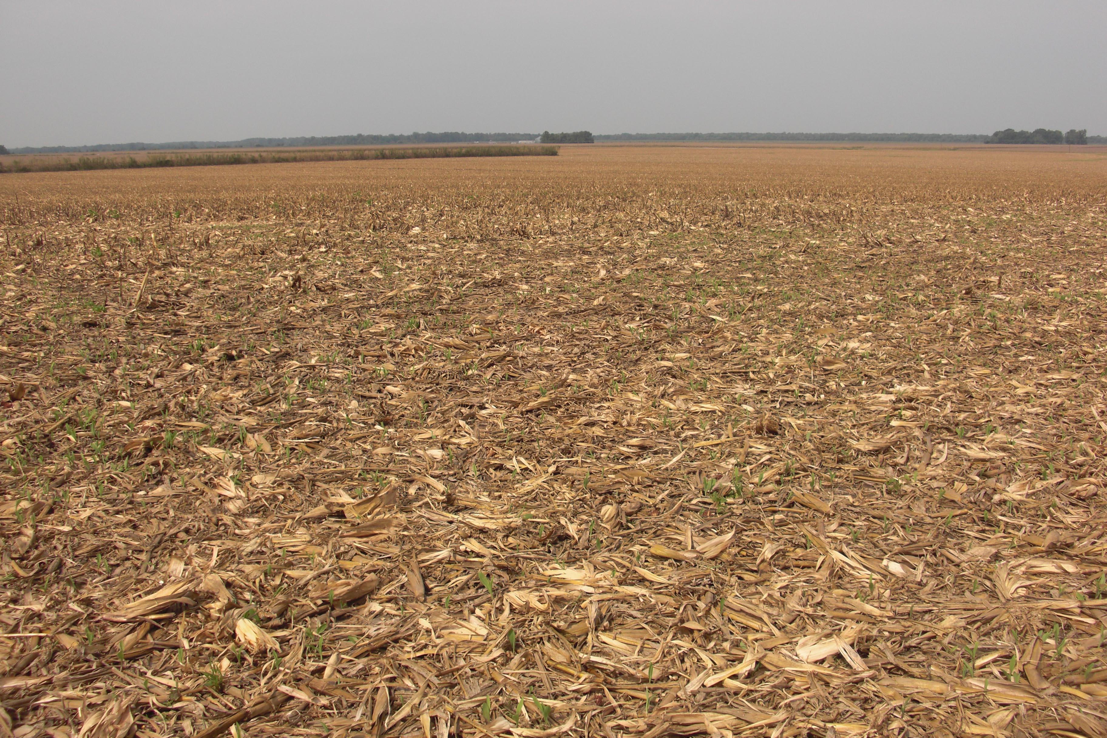 QAnon 18 April 2020 - Harvested_corn_field